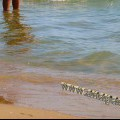 Анапа пляж Демете чистота воды у берега