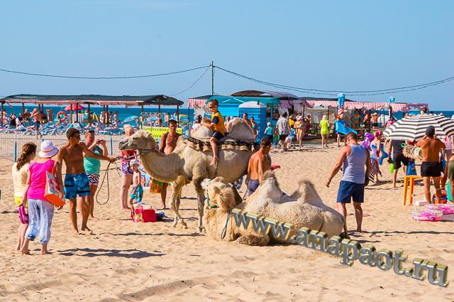 Пляж Витязево аттракцион катание на верблюде